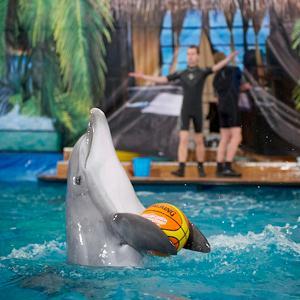 Дельфинарии, океанариумы Лисков