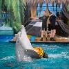 Дельфинарии, океанариумы в Лисках